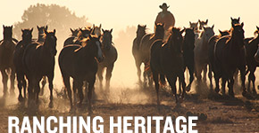 Photo Courtesy of Ranching Heritage on AQHA.com