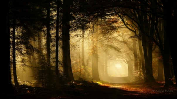 The secret forest by Nelleke Pieters, nelleke.deviantart.com